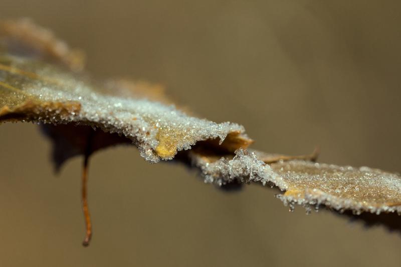serraestrela gelo inverno folhas