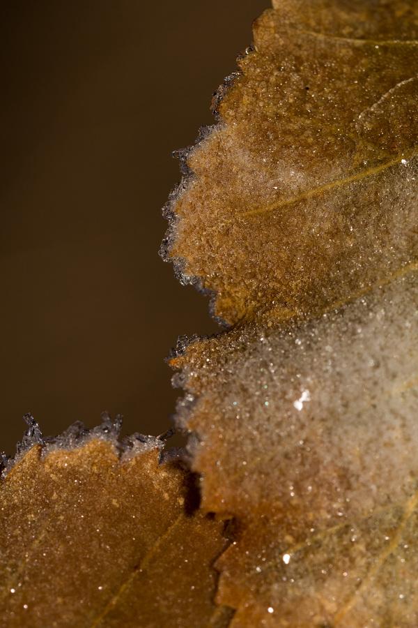 serraestrela covão-da-ametade outono folhas gelo