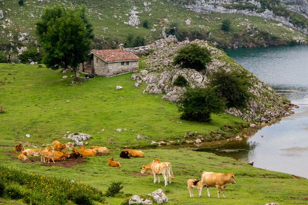 lago enol vaca espanha picos-da-europa