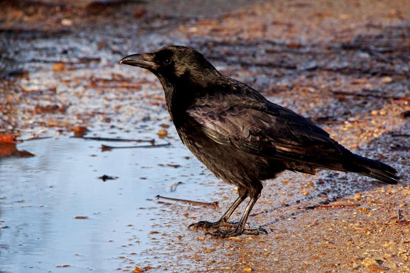 paris france corvo ave