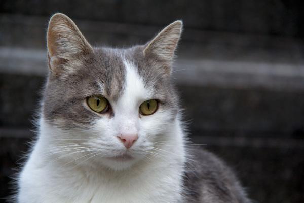 france paris montmartre cemitério gato