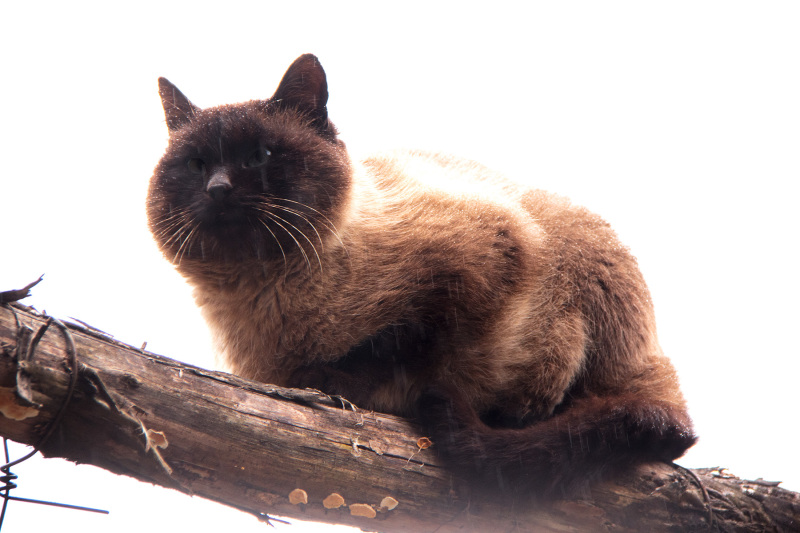 lousã  outono  nevoeiro gato chuva