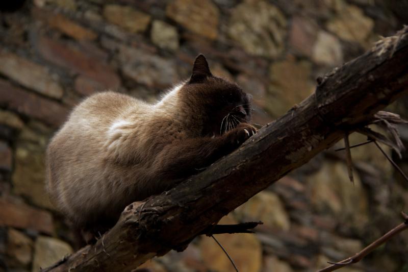 lousã outono gato chuva
