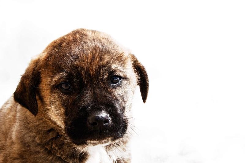 serraestrela cão inverno neve