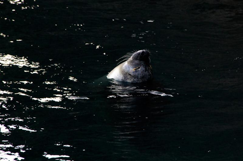 espanha coruña aquario finisterrae foca