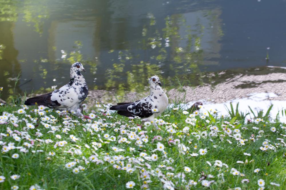 leiria rio riolis pombo