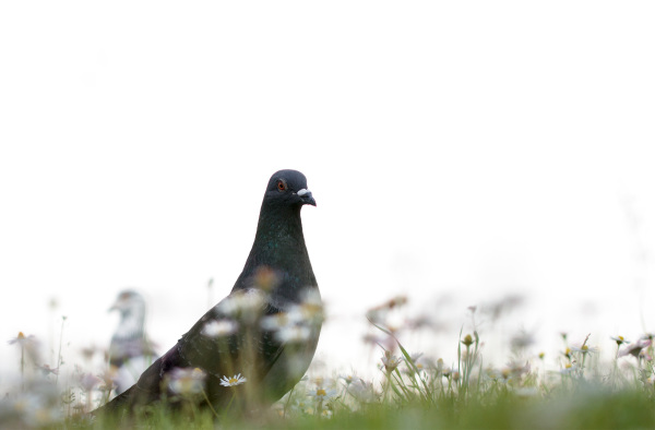 leiria pombo