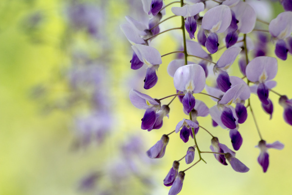 pnsac primavera flor arvore
