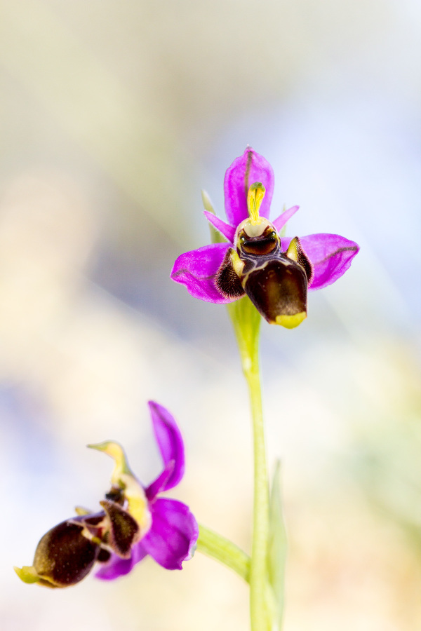 pnsac primavera flor orquidea