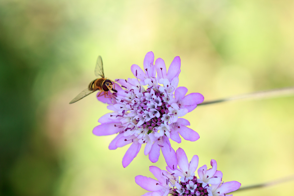 mosca insecto primavera