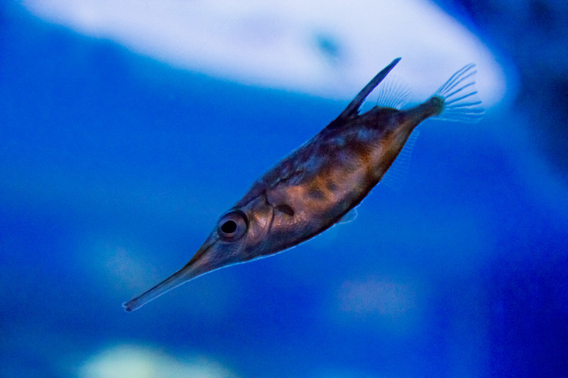 espanha coruña aquario finisterrae peixe
