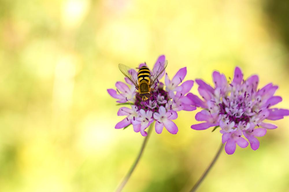 flor primavera mosca