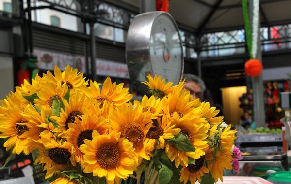 flor figueira-da-foz mercado girassol balança