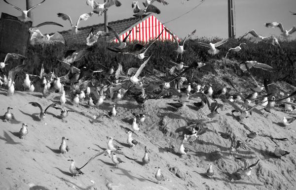 vieira arte-xávega gaivota