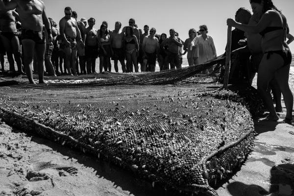 vieira arte-xávega  rede peixe