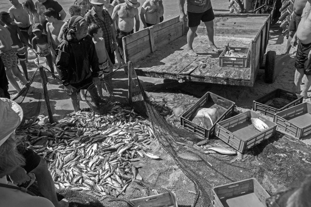 vieira arte-xávega rede peixe pescador