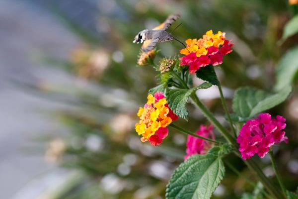 borboleta-noturna borboleta leiria