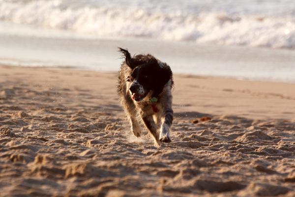 peniche baleal mar cão praia