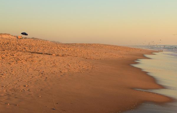 vieira gaivota sunset praia mar