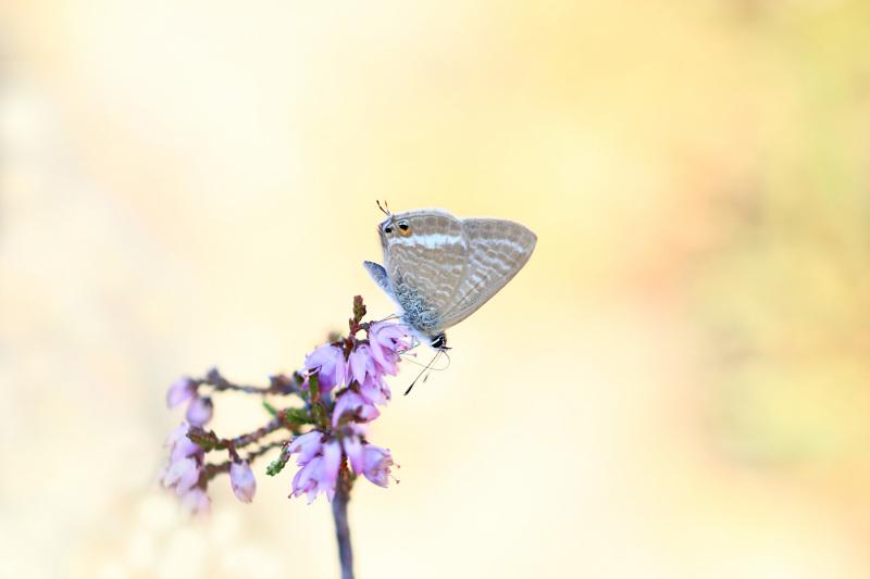 lousã santoantóniodaneve outono borboleta