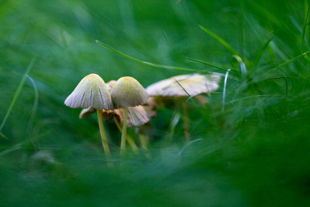 serraestrela covão-da-ametade cogumelo verão