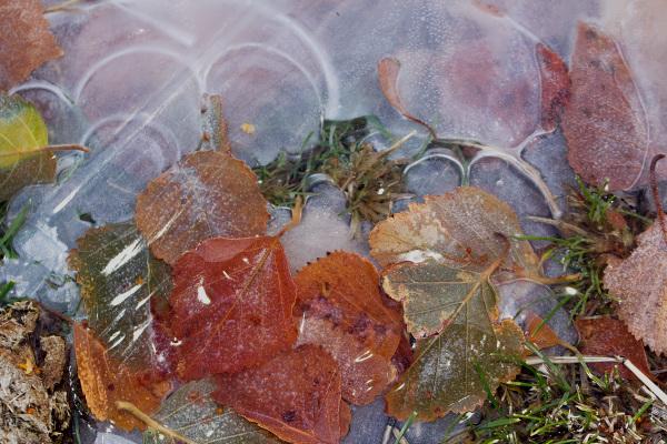 serraestrela covão-da-ametade folhas gelo