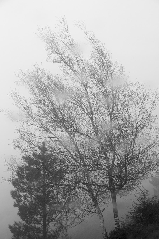 lousã árvore nevoeiro chuva neve