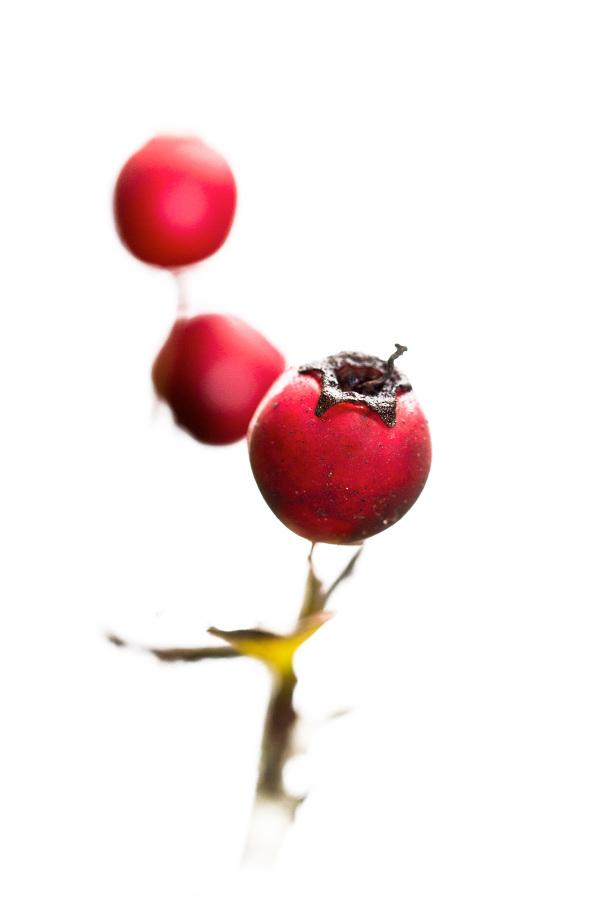 sicó outono fruto high-key