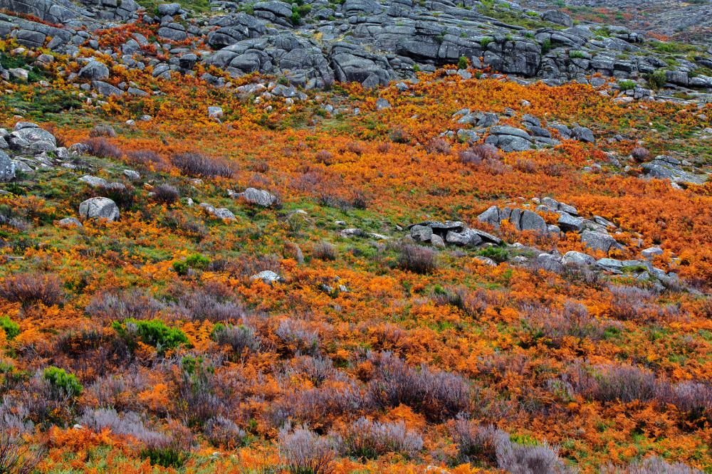 The orange mountain