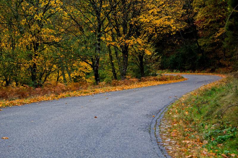 Autumn paths