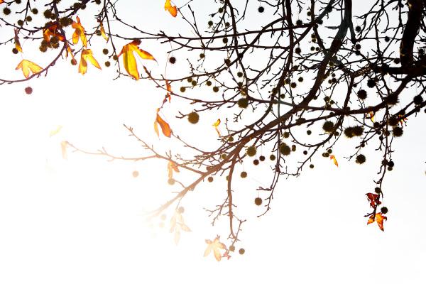 Versos que caem das folhas