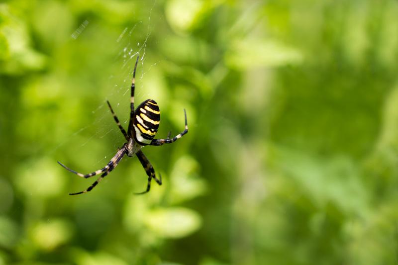 Araña en Zumaia