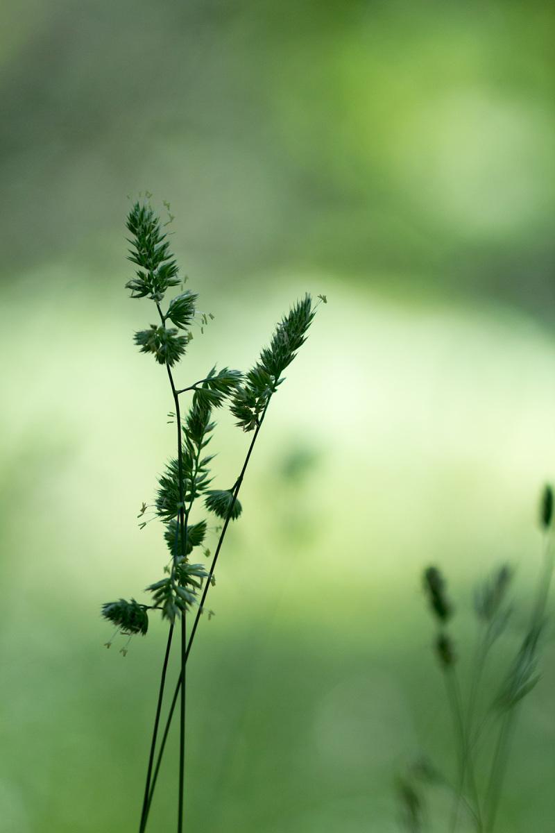 ...leve como uma brisa ou forte como uma ventania