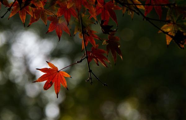 Cheirinho a outono
