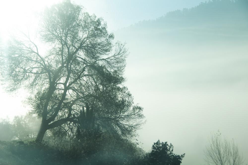 Cheiro a terra as árvores e o vento