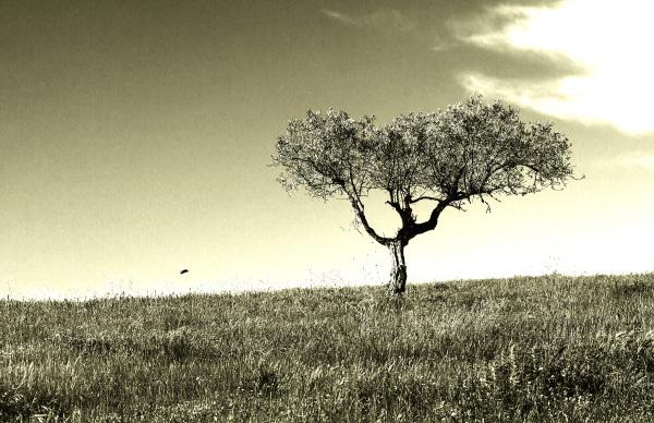 A Árvore e o Pássaro