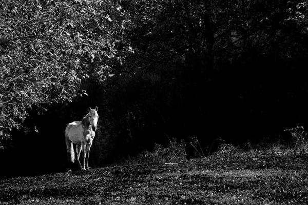 A magic horse