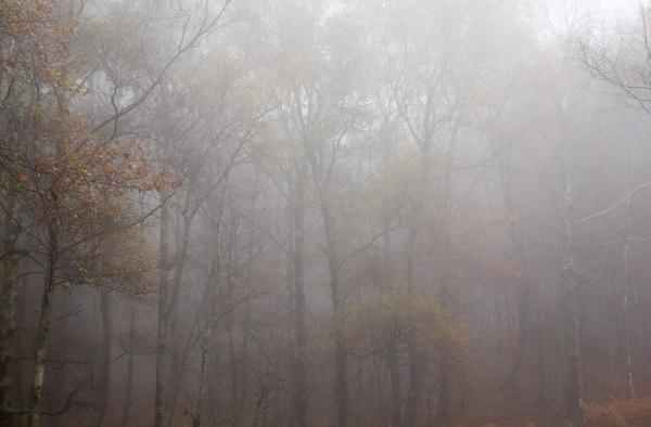 Brumas  de outono