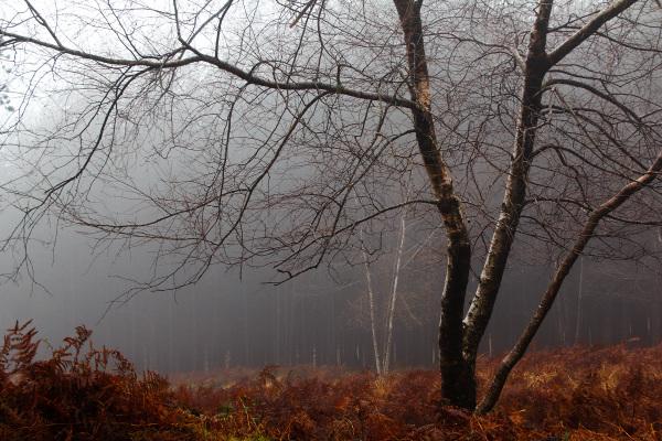 Balada de outono