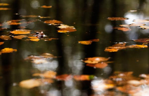 Mergulhada no outono