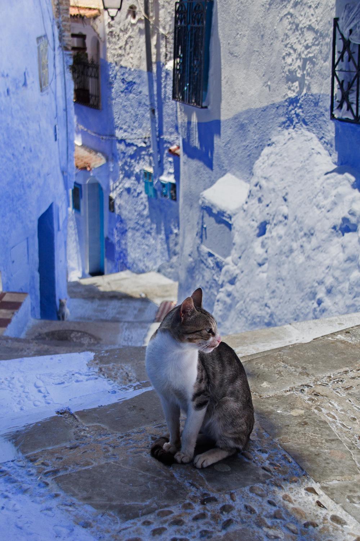 Um gato na cidade azul