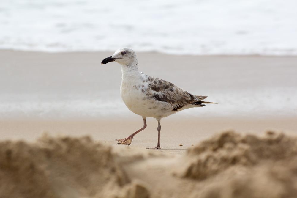 Passeando na praia