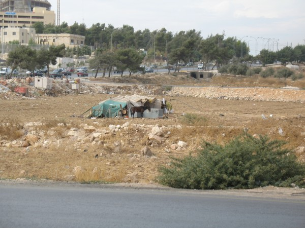 bedouines