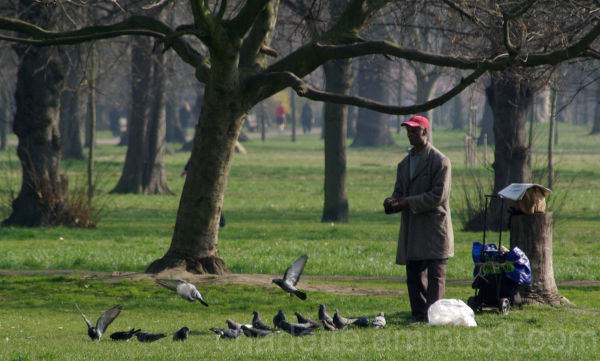 man feeding birds in a park in London