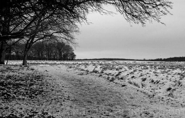 winter in Dyrehaven