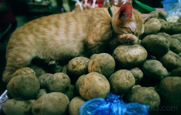 cat market potatoes