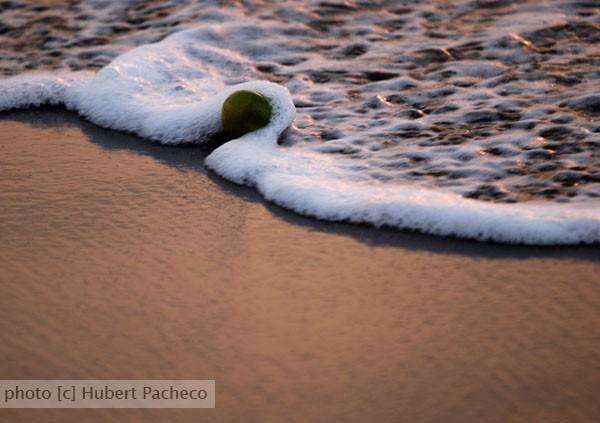 apple wave beach