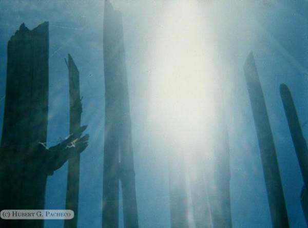 bamboo sunlight sky