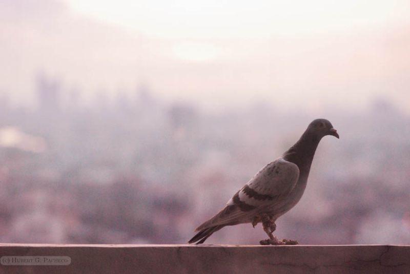 greenhills skyline san juan bird