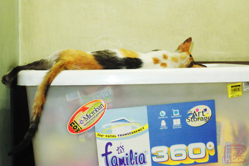cat sleeping storage box
